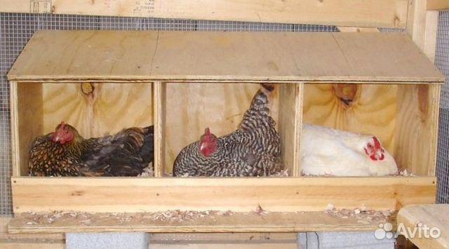 Гнездо для курей несушек