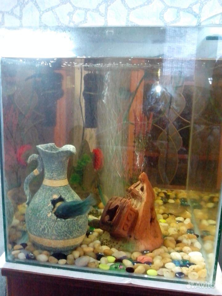 Продам аквариум в комплекте купить на Зозу.ру - фотография № 2
