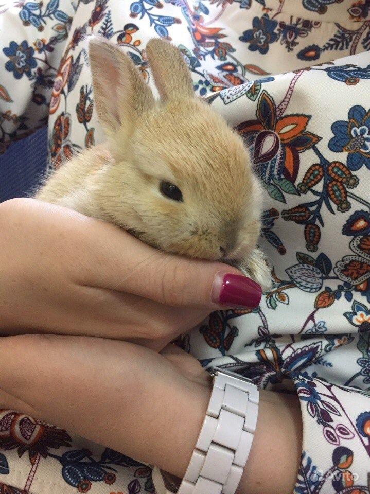 Карликовые декоративные кролики от заводчика в Москве - фотография № 9