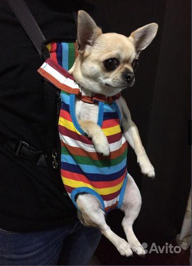 Рюкзак- переноска для собак
