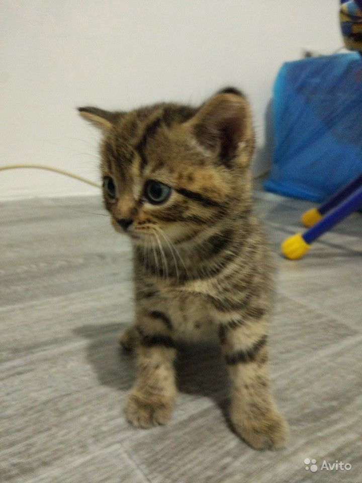 Котенок в Сызрани - фотография № 1