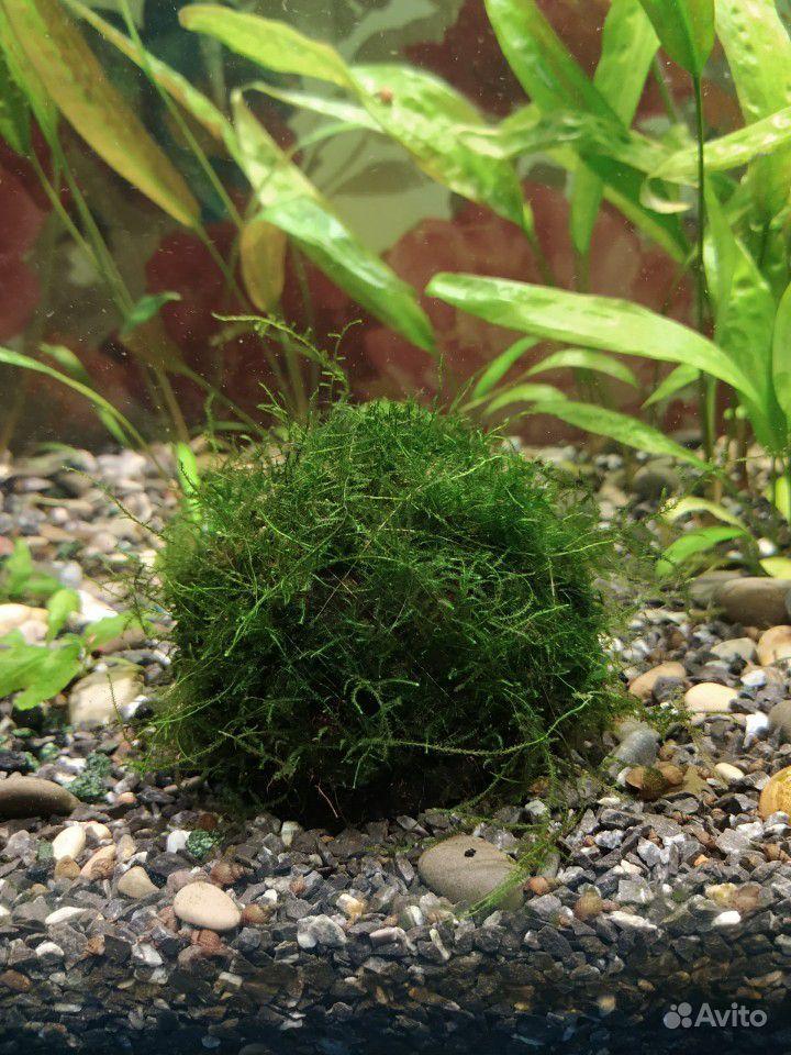Аквариумный мох купить на Зозу.ру - фотография № 1