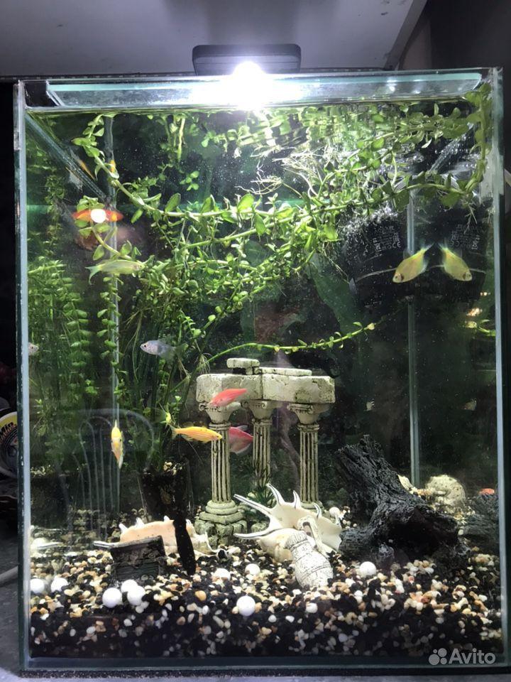 Продам аквариум 30л с рыбками купить на Зозу.ру - фотография № 2