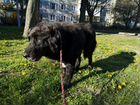 Крупный пёс на охрану, злой