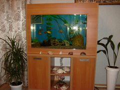 Продается аквариум на 100 литров вместе с тумбой