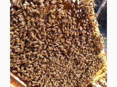 Продаю пчелопакеты и семьи