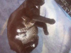 Коты от кошки мышеловки