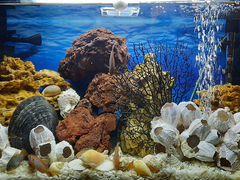 Большой аквариум. Псевдоморе