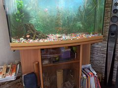 Продается аквариум на застекленной тумбе со всем о