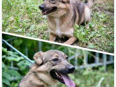 Очаровательная Милка- собака компаньон
