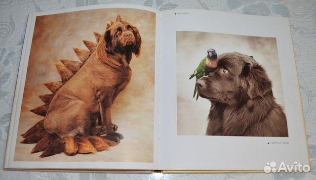 Рейчел Хэйл. 101 фотогерой. С любовью к собакам