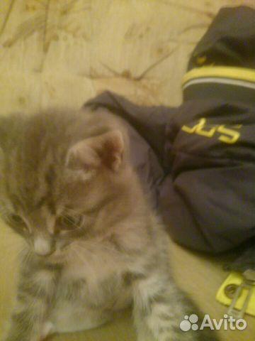 Лёха кот юрга