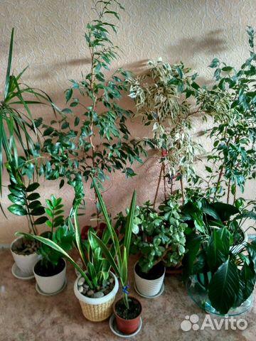 Цветы в амурской области купить курьерские услуги доставка цветов