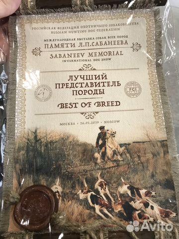 Бультерьер-чемпион на вязку купить на Зозу.ру - фотография № 10