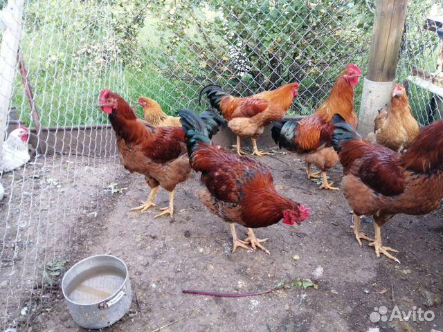 курицы ижевска фото музее сохранились фото