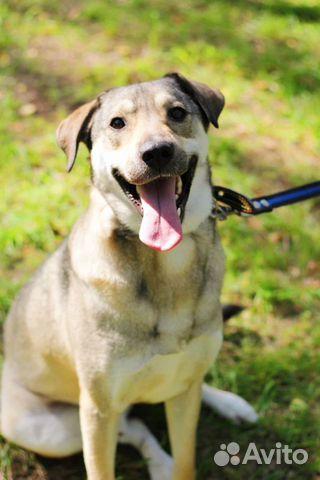 Пес красавчик Грей в добрые руки купить на Зозу.ру - фотография № 4