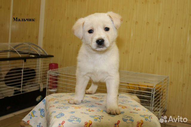 Собака купить на Зозу.ру - фотография № 2