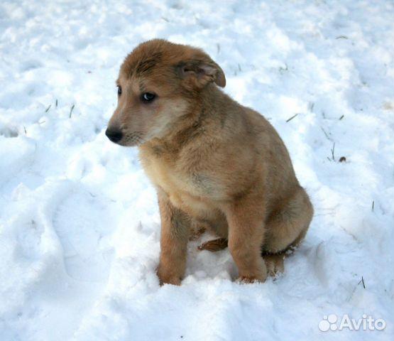Малыши ищут семью (8 щенков метисов в дар) купить на Зозу.ру - фотография № 7