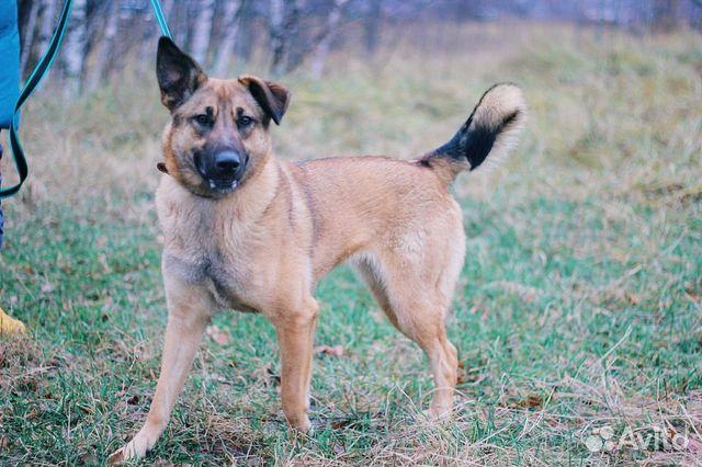 Молодая собака в дар купить на Зозу.ру - фотография № 6