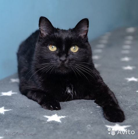 89137249811 Сказочная кошка Багира