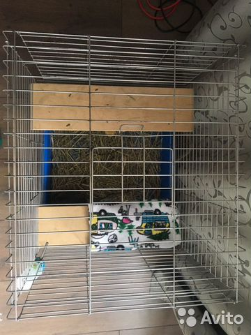 Chinchilla (with cage) 89202736904 buy 4