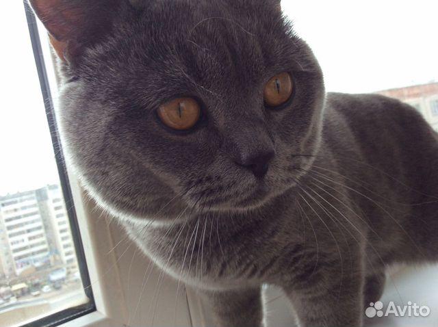 Свердловская область кот