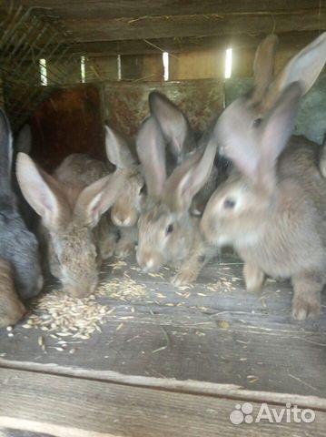 Молодые кролы