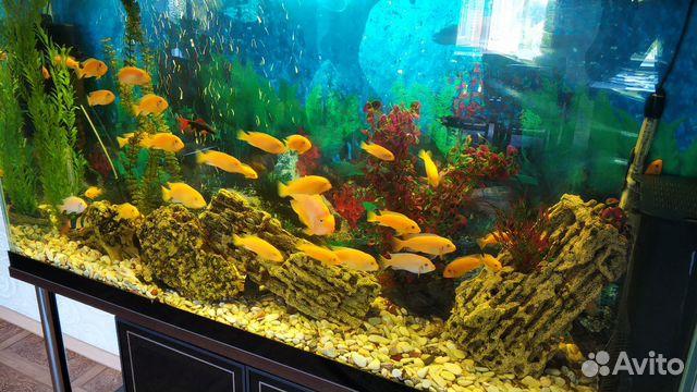Аквариум с системой и рыбками  купить 4