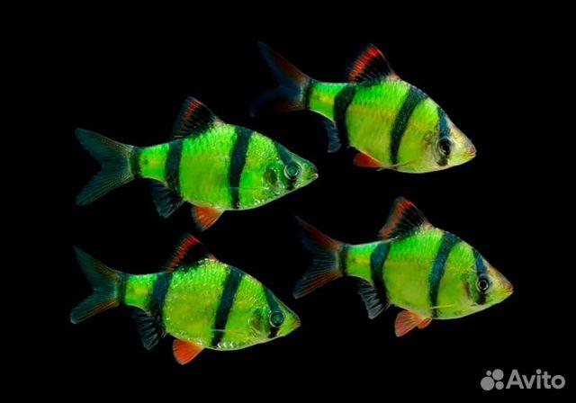 Украшение для аквариума  купить 1
