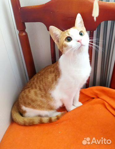 Котик и кошечка ждут своих хозяев  89038039728 купить 2