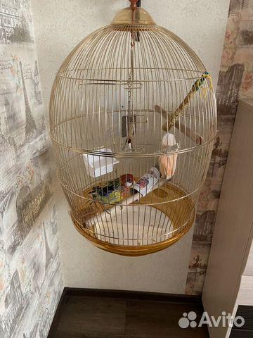 Продам попугая  89628134260 купить 2