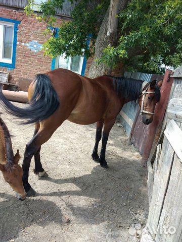 Лошадь с жеребенком  89053862728 купить 1