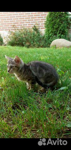 Кошка  89652047525 купить 1