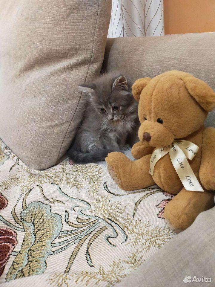 Отдам котеночка в хорошие руки  89538627737 купить 1