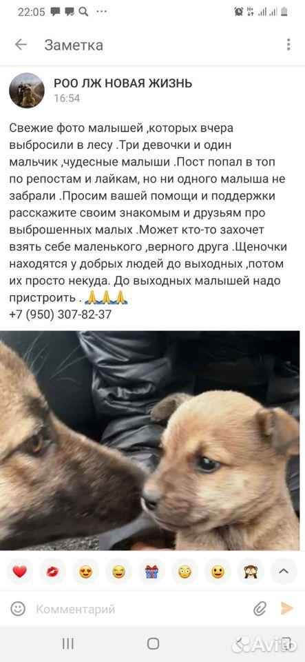 Собака  89135374148 купить 1
