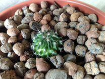 Кактусы в горшках - много разных кактусов