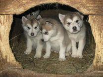 Много разных щенков