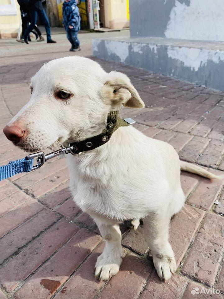 Коротколапые собаки в добрые и ответственные руки