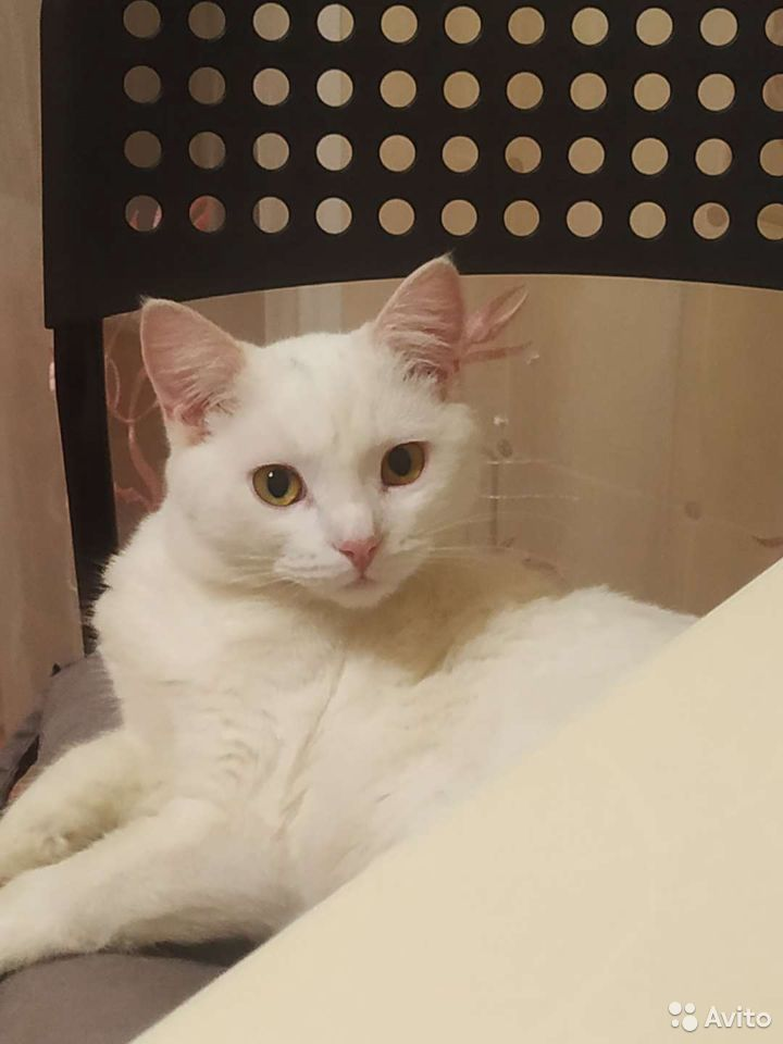 The cat needs a home  89966173230 buy 2