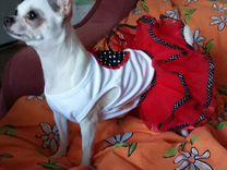 Одежда для любимой собачки