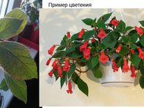 Комнатные цветы обмен