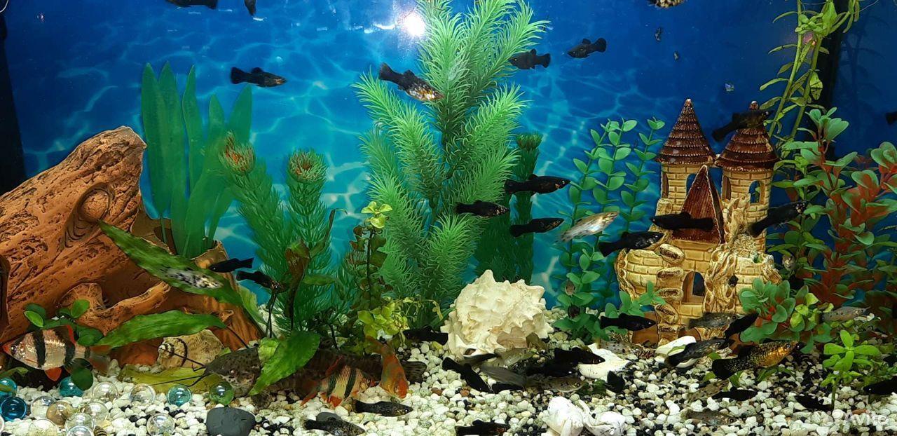 Аквариумные рыбки  89511423093 купить 1