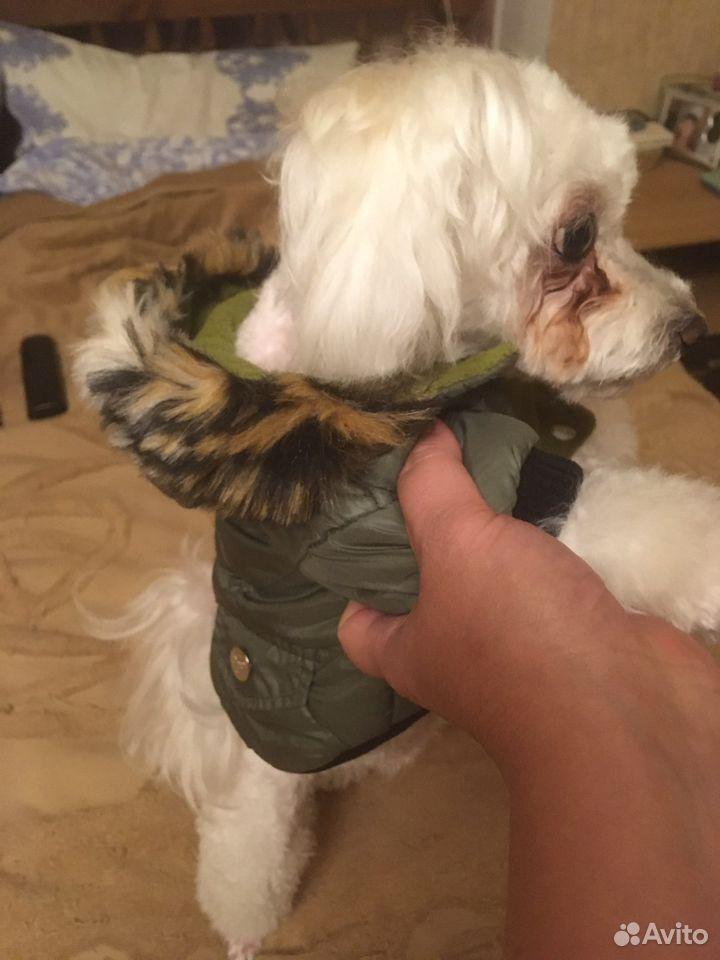 Куртка для собаки petsoo  89191738672 купить 2